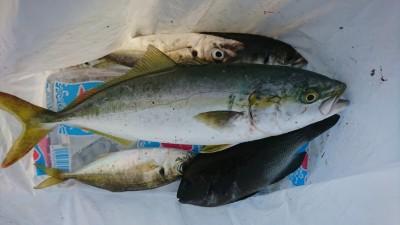 <p>沖の北リアルタイム(6:00) 豆アジのませでツバス!サビキで中アジも釣れていましたよ。今日も豆アジと小サバが多く中アジの数が伸びないようでした。</p>