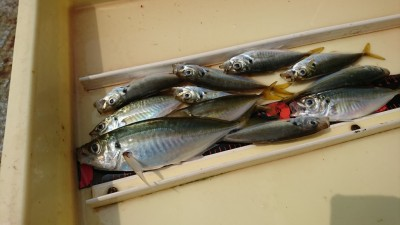 <p>沖の北 サビキ釣りで豆アジ!豆アジと小サバは1日中釣れています。中アジは朝夕の短い時間だけですが重たいカゴで底付近に仕掛けを落とさないと、豆アジ小サバにやられてしまいますよ。</p>