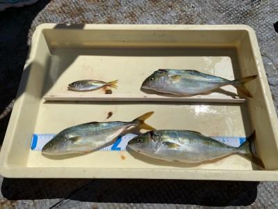 <p>8/5 沖の北 外向き サビキとジグサビキ 豆アジとツバスGET!東風の時は外向き風裏になり釣りがしやすいのでおススメです♪</p>