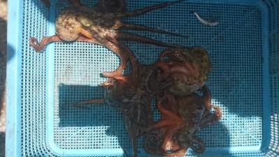 <p>森様 沖の北 タコジグ タコGET</p> <p>苦潮の影響か渋いですねーおめでとうございます</p>