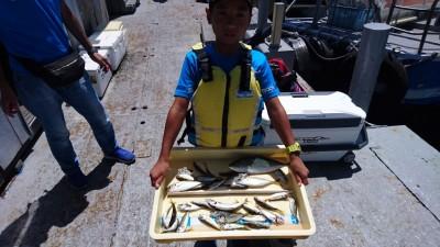 <p>ゆいし君 沖の北 サビキ/ノマセ アジ/ツバスGET</p> <p>豆アジは大量に釣れますね!おめでとうございます(^O^)</p>
