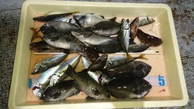 <p>津田様 沖の北 エビ撒き アジ/ガシラ/グレGET</p> <p>本命は現れずでしたが、色々釣れますね!おめでとうございます</p>