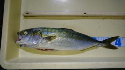 <p>宮崎様 沖の北 ノマセ ツバスGET</p> <p>ツバスは釣れ続いてます!おめでとうございます!</p>