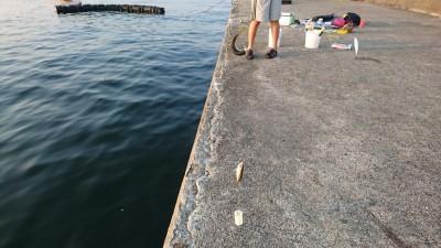 <p>沖の北リアルタイム(6:00) 今日も内向きで豆アジ・小サバが釣れていました!昨日は沖向きで中アジが良かったんですが誰もやってない…。ツバスも沖向きで釣れていましたよ。旧一文字先端内向きでも豆アジ・小サバの釣果を確認できました。</p>