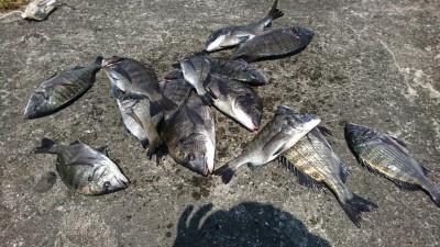 <p>伊丹様 旧一文字カーブ外向き 紀州釣りで39㎝までのチヌ17枚!!!5時半~11時までの釣果です。満潮までの2時間は餌とりのあたりもなかったようですが、潮が下げはじめてからはコンスタントに釣れたそうです。マルキュー紀州釣り大会の予選も近づいてきましたので練習にも力が入りますね♪</p>