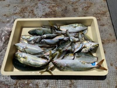 <p>8/11 徳田様 沖の北 外向き サビキ/ルアー ツバスと豆アジ大量にGET♪非常に暑いので水分補給はしっかりと^ ^外向きの方が少し風が当たるのし魚も多そうな感じなのでおススメです♪</p>