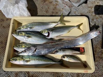 <p>沖の北 太刀魚・ツバス・中アジ サビキで釣れたアジののませ釣りでの釣果です♪ツバスの胃袋を見てみるとウルメイワシが3匹(^O^)サビキでもウルメイワシが沢山釣れてます♪ルアーでツバスを狙う方はイワシカラーで試してみてはどうでしょう^ ^</p>