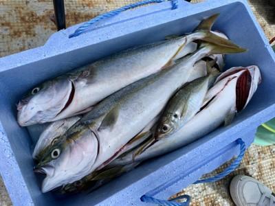 <p>沖の北 ツバス・中アジ のませ釣りでツバス9匹ゲット♪最近ツバスが減ってきてた中よく釣られています♪おめでとうございます(^O^)</p>