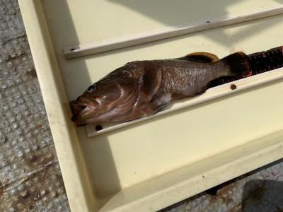 <p>沖の北 先端 低場 内向き アコウ エビ撒き釣りでの釣果です♪満潮時や船が近くを通ったりした場合は波を被ったりする場合がありますが魚影は濃いですね♪メバルやガシラも釣っておられました!おめでとうございます(^ ^)</p>