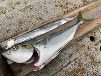 <p>匿名様 沖の北 メジロ76cm・太刀魚80cm メジロは6時半ごろにのませ釣り(エレベーター仕掛け)でHITされています♪太刀魚はドジョウを使ったテンヤでの釣果です♪おめでとうございます(^O^)</p>