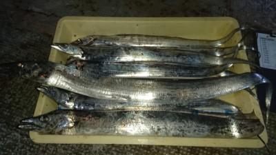 <p>大川様 沖の南 テンヤ タチウオ多数GET</p> <p>沖の南でも釣れてますが、沖の北の釣果には及ばずですねーおめでとうございます(^O^)</p>