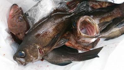 <p>山岸様 旧一文字赤灯 エビ撒き釣り 良型メバル!根魚大漁♪</p>