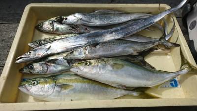 <p>沖の北 ショアジギでツバス2匹・サゴシ4匹・タチウオ6本!ショアジギでナイスな釣果♪これだけ釣れたらおもしろいですね。ナブラが出ればチャンス!</p>