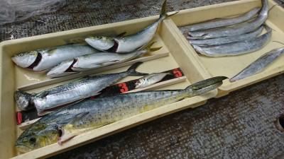 <p>沖の北 ショアジギでツバス・サゴシ・タチウオ・シイラ!ツバスはのませ釣りでも釣れたそうです。今岸和田一文字でショアジギで狙える魚が勢揃い♪これだけいろいろ釣れたらおもしろいですね♪</p>