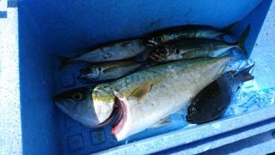 <p>沖の北 サビキ釣りで豆アジ・小サバ・グレ!ツバスも♪サヨリもけっこう見えてたみたいです。</p>