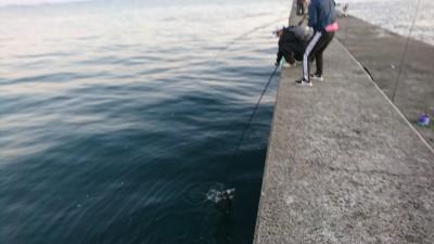 <p>沖の北リアルタイム(5:40) のませ釣りでもツバス!</p>