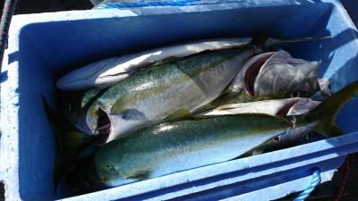 <p>広石様 沖の北 のませ釣りでツバス~ハマチ!安定ののませ釣り♪エサの確保はオイルフェンス付近がおすすめです。</p>