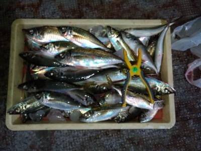 <p>磯田名人様 沖の北 飛ばしサビキで中アジ多数GET♪15時半頃から釣れ出し尺アジも混ざってます♪おめでとうございます(^o^)</p>