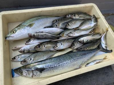 <p>上野様 沖の南 ツバス・サゴシ・豆アジ〜中アジ アジは朝の5時半〜6時までと短い時合ですが20匹程釣られています!ツバスは釣れたアジを使いのませ釣りでの釣果でサゴシはメタルジグで釣られています♪おめでとうございます(^o^)</p>