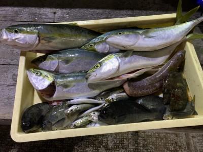 <p>能勢様 沖の北 ツバス〜ハマチ・小アジ・グレ・カワハギ・エソ 青物はのませ釣りでの釣果でその他はサビキやルアーで釣られています♪やはり、のませ釣りは安定して釣れてますね!ただ、アジを釣るのに皆さん苦労されています!釣れる時間帯は一気にストックするのがオススメですよ^ ^</p>