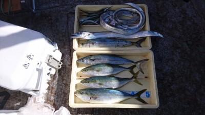 <p>子供店長様 沖の北 ルアーでタチウオとサゴシとツバスGET</p> <p>ルアーでも好釣果出てますね(^O^)おめでとうございます</p>