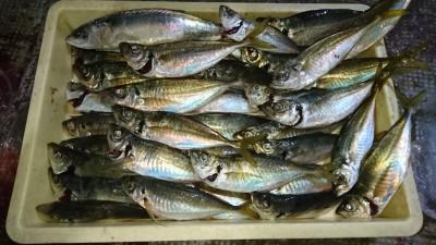 <p>津田様 沖の北 サビキ 中アジ大漁!</p> <p>この所、中アジの釣果が凄い事になってます!サイズも25~28位まであるので、釣れてる内に来てくださいね(^O^)おめでとうございます</p>