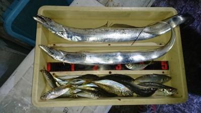 <p>キムキム様 沖の北 サビキとテンヤでアジとタチウオGET</p> <p>タチウオ厳しいですが、良型釣れてますね!おめでとうございます</p>
