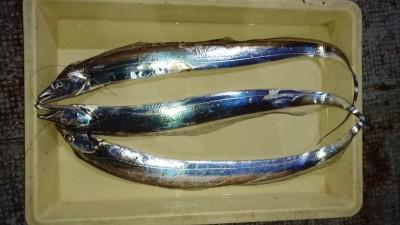 <p>目黒様 沖の北 ウキ釣り タチウオGET</p> <p>タチウオは終盤になってますねー居残りタチウオを釣るイメージですね、おめでとうございます(^O^)</p>
