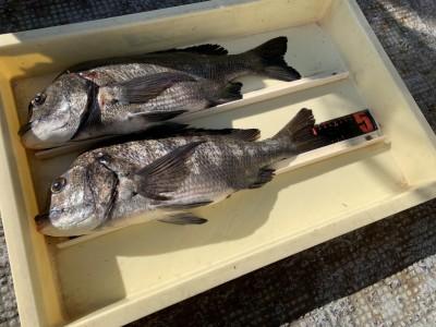 <p>増田様 沖の北 フカセ釣りでチヌ42〜45cm二枚 GET^ ^刺し餌はオキアミで撒き餌を撒くと見える程チヌが浮いていたとの事でした!おめでとうございます(^o^)</p>
