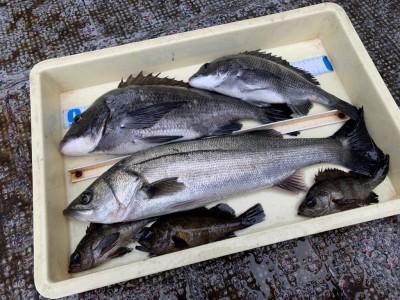 <p>福山様 沖の北 エビ撒き釣りでハネ・チヌ・メバル GET♪今日は根魚が少なかったとの事でした。最近はハネやスズキはのませ釣りでも釣れてますよ♪おめでとうございます^ ^</p>