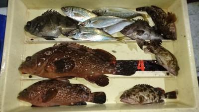 <p>福山様 旧一文字白灯 エビ撒き アコウとガシラとメバルとアジGET</p> <p>根魚色々釣れてるようですね!おめでとうございます(^O^)</p>