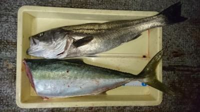<p>村尾様 沖の北 ノマセ ハネとメジロGET</p> <p>ハネの釣果が目立ってきましたね!おめでとうございます(^O^)</p>