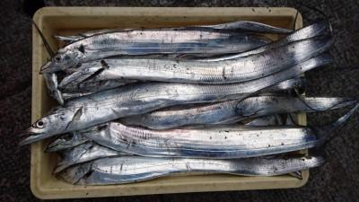 <p>ボンゴのムーヤン様 沖の北 ルアーとテンヤでタチウオGET</p> <p>今日もタチウオ良く釣れてます!おめでとうございます(^O^)</p>