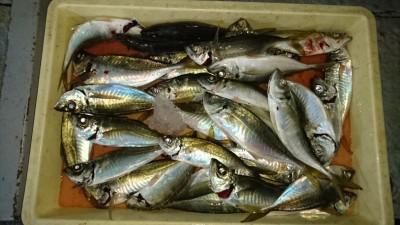<p>津田様 沖の北 サビキ 中アジGET</p> <p>昼過ぎからパラパラ釣れていたようです(^O^)おめでとうございます</p>