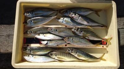 <p>川野様 沖の北 サビキ 中アジGET</p> <p>中アジは最近日中でも釣れているようです。おめでとうございます</p>