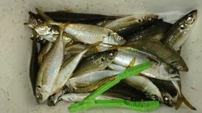 <p>磯田様 沖の北 サビキ 中アジGET</p> <p>今日はずっと釣れていたようです(^O^)おめでとうございます!</p>
