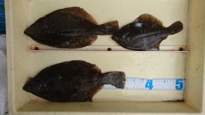 <p>井原様 沖の北 投げ釣り カレイGET</p> <p>7時位までの釣果だそうです(^O^)おめでとうございます!</p>