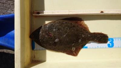 <p>鈴木様 沖の北 投げ釣り カレイGET</p> <p>カレイの釣果が減っていますが、今月一杯は大丈夫ですね(^O^)おめでとうございます</p>