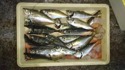 <p>津田様 沖の北 サビキ 中アジGET</p> <p>今日は先端の方はあまり釣れなかったようですねーおめでとうございます(^O^)</p>