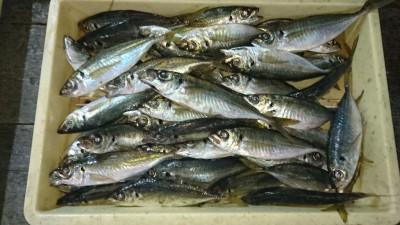 <p>高倉様 沖の北 サビキ 中アジGET</p> <p>真冬のはずなんですが、アジずっと釣れてますね!おめでとうございます(^O^)</p>