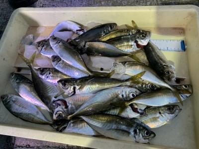 <p>津田名人様 沖の北 オイルフェンス付近 飛ばしサビキで15時頃から中アジ多数GET♪魚の鮮度もばっちり保たれていて完璧です^ ^</p>