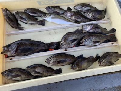 <p>大谷様 沖の北 ウキ釣りでメバル〜22cmまでを多数GET♪底付近をしっかりと重点的にねらえば数釣れてますね♪おめでとうございます(^O^)</p>