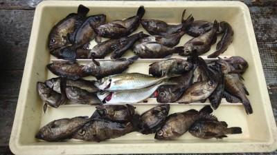 <p>大谷様 沖の北 サグリ釣り メバルGET</p> <p>数は釣れるようですが、サイズがイマイチなようです(^_^;)おめでとうございます!</p>