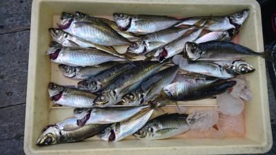<p>津田様 沖の北 サビキ アジGET</p> <p>周りの方は2~3匹位しか釣れていなかったようですが、ベテランの方は釣れてますね!おめでとうございます(^O^)</p>