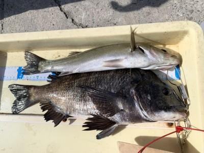 <p>岡本様 沖の北 エビ撒きでハネ39cmとチヌ43cm GET♪この時期は釣り物が少ないですがハネ・チヌは好調ですね!今朝は小アジもぽろぽろ釣れてたとの情報も!!</p>