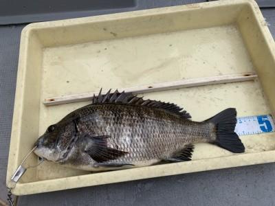 <p>菅原様 沖の北 エビ撒きで45cmのチヌ GET♪チヌはフカセでも釣れてますよ♪おめでとうございます^ ^</p>
