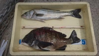 <p>三谷様 沖の北 エビ撒きでハネとチヌGET</p> <p>オイルフェンス付近は好釣果のようです(^O^)おめでとうございます!</p>