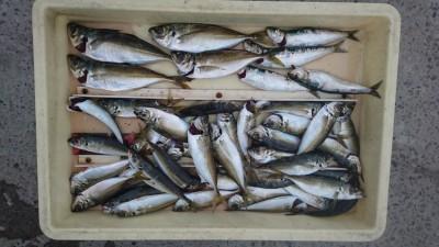 <p>津田様 沖の北 サビキ アジGET</p> <p>今日はよく子アジが釣れたようですね!おめでとうございます(^O^)</p>
