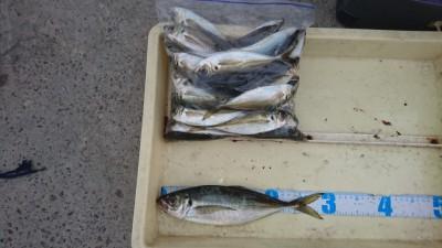 <p>石田様 沖の北 サビキ アジ~29.5cmまでGET</p> <p>良型のアジ釣れていますね!今年はアジのアタリ年の予感です(^O^)おめでとうございます!</p>