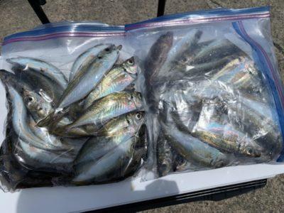 <p>沖の北 サビキ釣りで小アジ40匹程GET!サバを上手いことかわすと狙えますね!中アジは朝夕に少し混じります!</p>